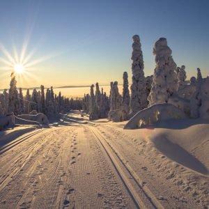 Winter sports: Discover Thuringia